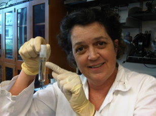 Deborah extracting mouse DNA
